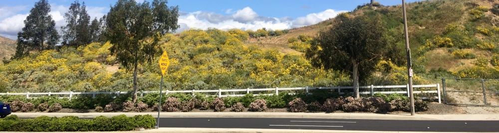mustard on road